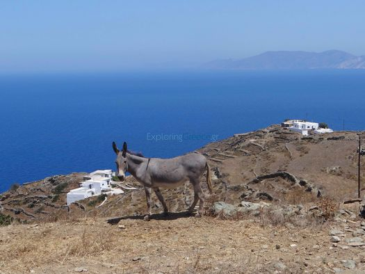 Donkey and on the background rural houses in Ano Meria, Folegandros