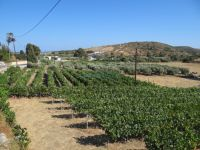 Dodecanese - Lipsi - Vineyards
