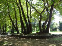 Large plane trees and recreation area in Ano Kastanoussa