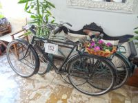 Argosaronikos - Spetses - Tweed Run