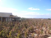 Sigalas wineyard